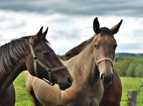 horses-2962715_1920