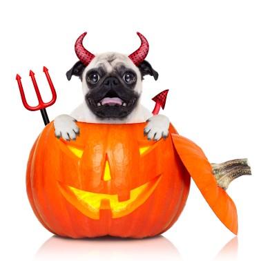 George in Halloween costume